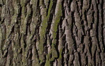 Ładny i {czysty zieleniec to nie lada wyzwanie, w szczególności jak jego konserwacją zajmujemy się sami.